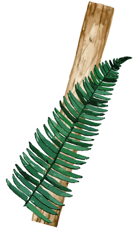 left leaf image