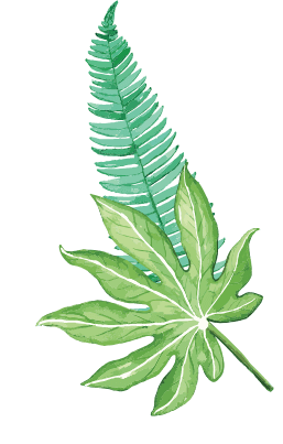 right leaf image